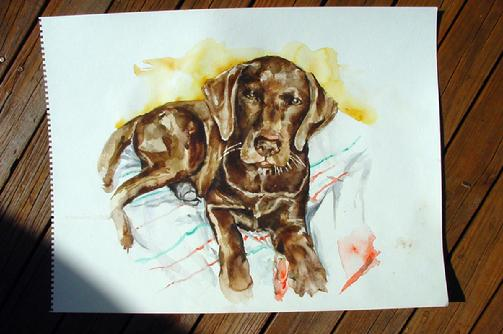 mylie the chocolate lab original watercolor